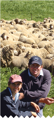 Welcome to Bundilla Poll Merino Stud