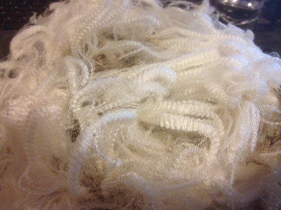 Bundilla Sire SS1 wool