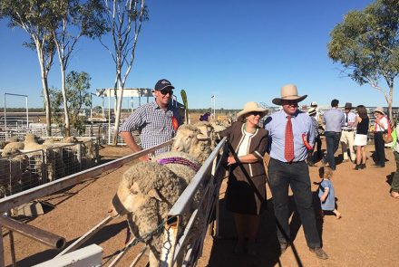 Rick Judging Longreach QLD Ewe Comp